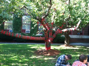 A tree grows at MassArt (c) ElainePelz