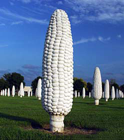 Field of Corn, Dublin, OH